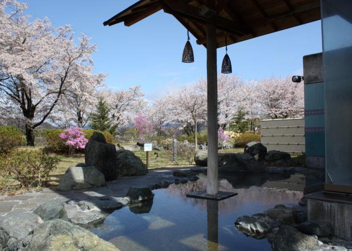 藤野やまなみ温泉 森の湯 露天風呂 庭の桜が満開
